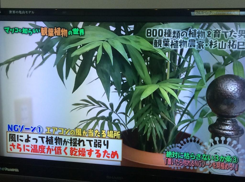 マツコの世界 観葉植物 エアコン