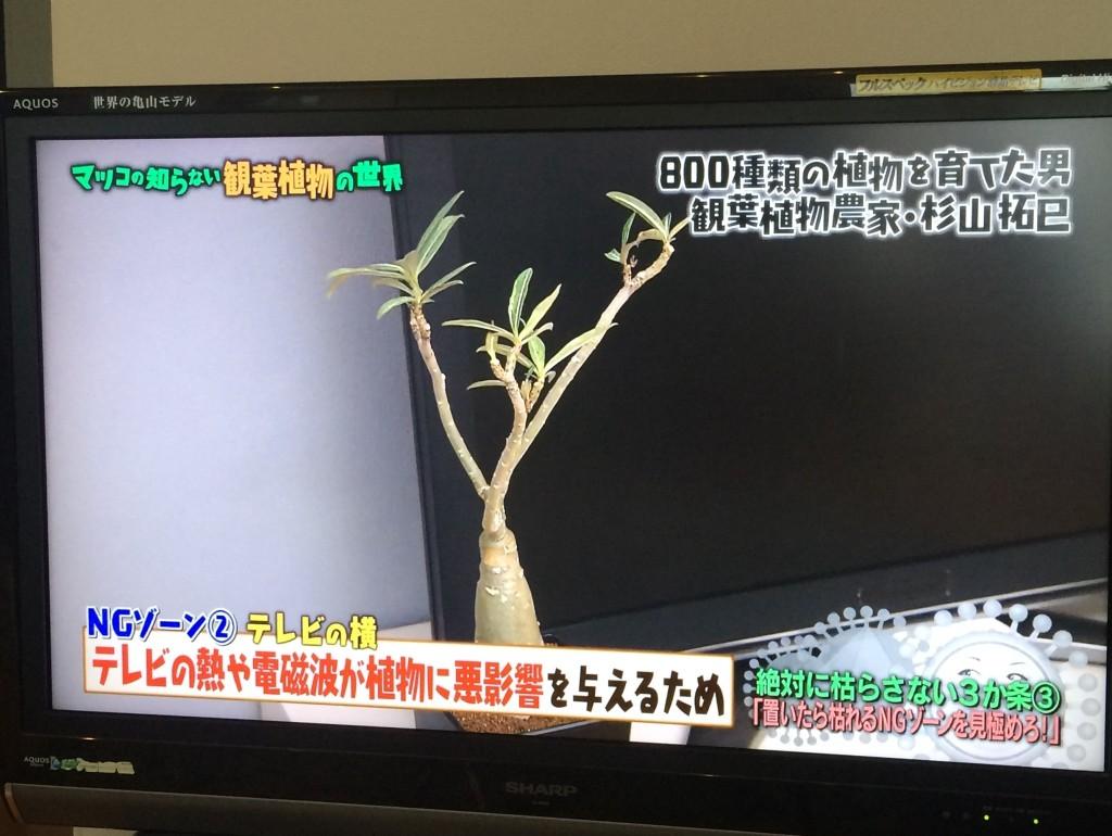 マツコの世界 観葉植物 テレビ