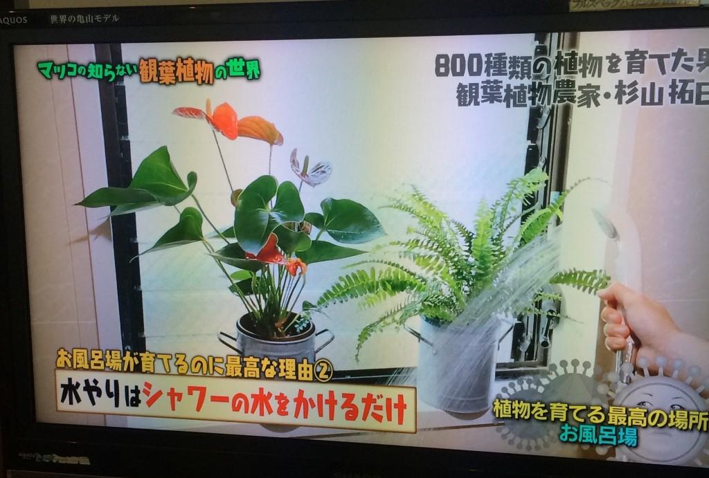 マツコの知らない世界 観葉植物 お風呂場