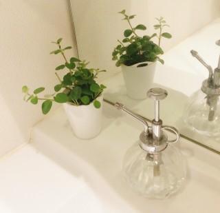 無印良品の観葉植物 洗面所に置いてみた